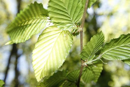 feuilles-300px