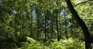 foret_durable
