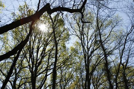 soleil-arbre-300px