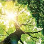 arbre-cvo