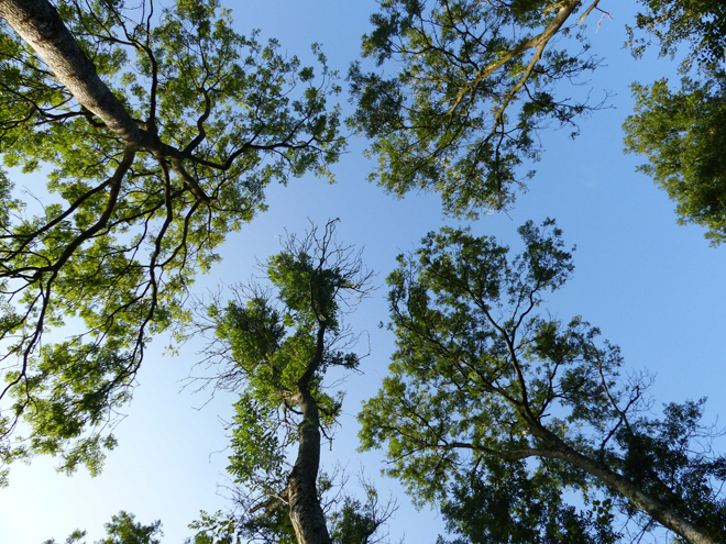 Chalfrax s'appuie sur un partenariat associant organismes de recherche (Inra), ministère de l'Agriculture (DSF), établissements publics (CNPF, ONF, mais aussi gestionnaires et représentants  de la forêt privée (UCFF, Fransylva)